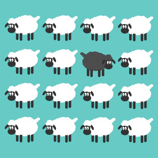 mouton-noir