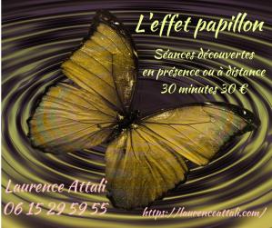 Papillon découverte
